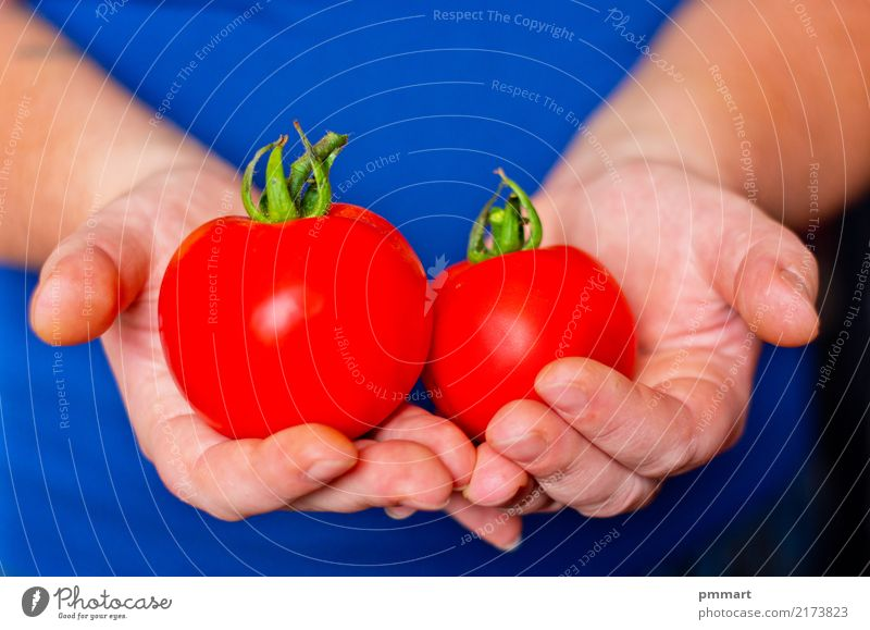 two ripe tomatoes in hands Vegetable Fruit Nutrition Diet Garden Hand Fingers Nature Plant Dirty Fresh Natural Blue Green Red White Colour Farmer volunteer