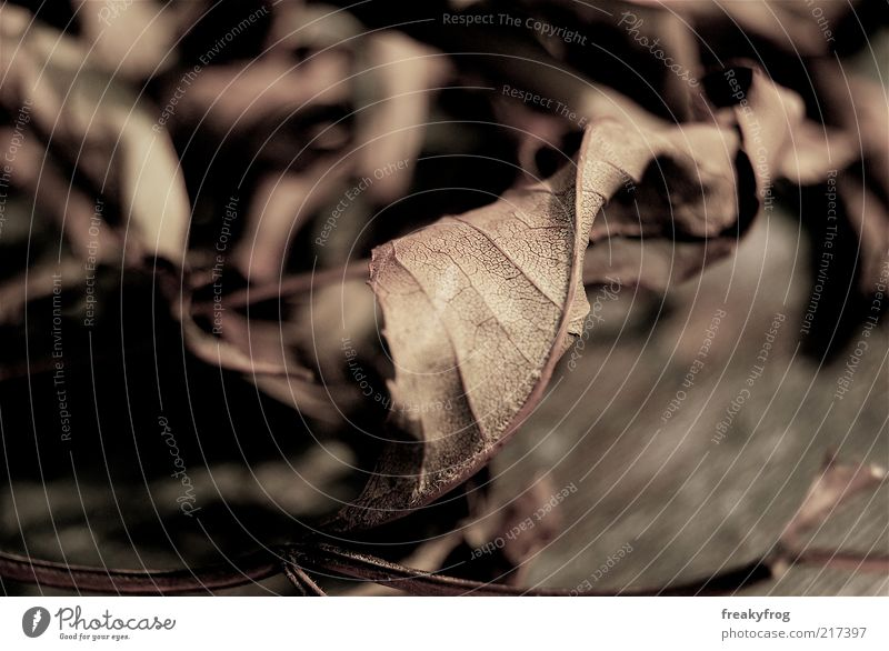 Nature Old Calm Leaf Autumn Emotions Moody Brown Environment Esthetic Change To fall Dry Faded Limp Autumnal