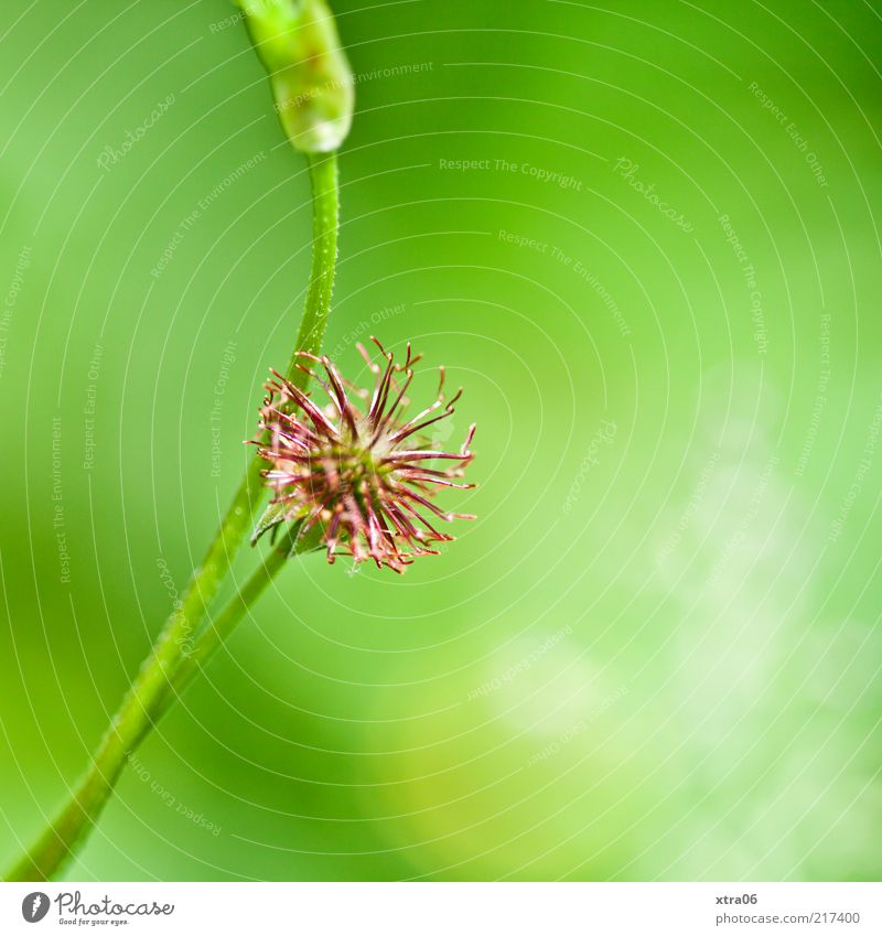 Nature Green Plant Blossom Environment Stalk Foliage plant Macro (Extreme close-up) Light