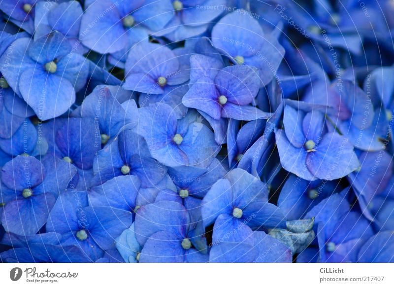 Nature Blue Beautiful Plant Flower Environment Blossom Natural Fresh Esthetic Many Soft Bouquet Fragrance Hip & trendy Exotic