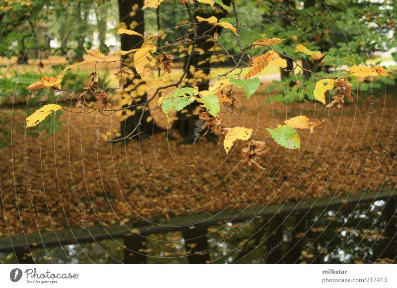 Autumn atmosphere in the park Environment Nature Landscape Plant Earth Water Bad weather Tree Leaf Foliage plant Park Forest River bank Brook Dark Wet Brown
