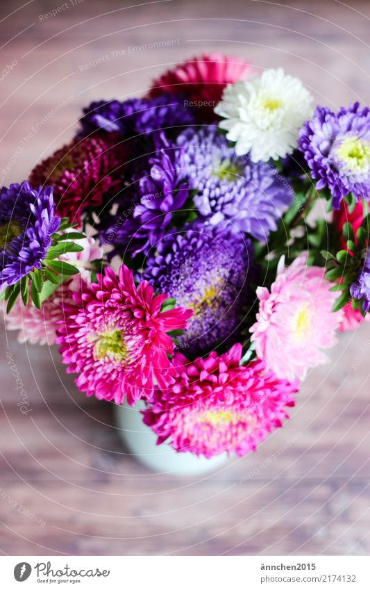 autumn bouquet Aster Flower Autumn Nature Vase Bouquet Blossom Pick Pink White Yellow Green Violet Gift Donate