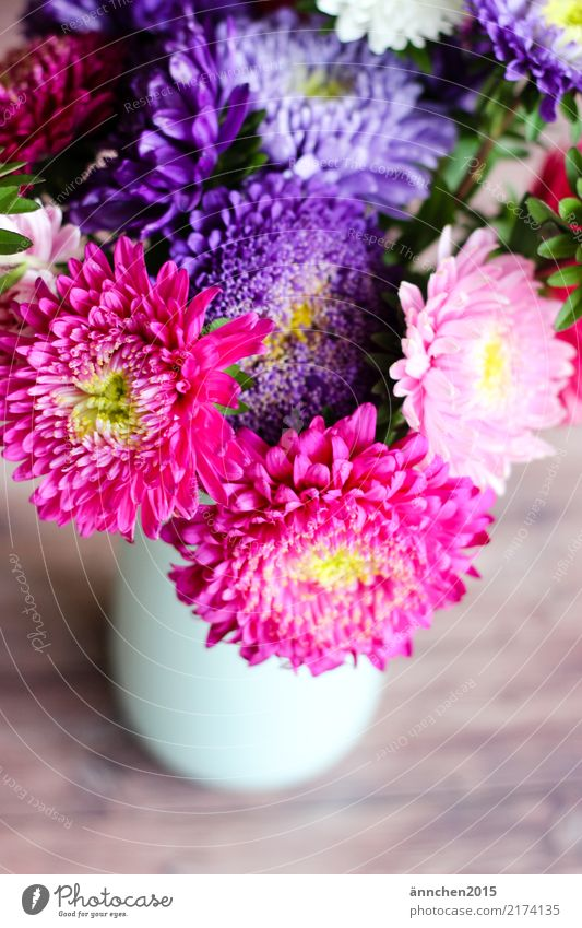 Nature Green White Flower Yellow Blossom Autumn Pink Violet Bouquet Vase Pick Aster