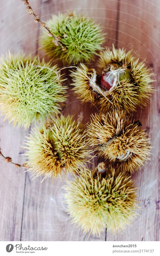 chestnuts Sweet chestnut Chestnut tree Brown Green Thorny Nature Autumn Dish Eating Food