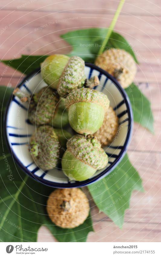 Nature Green Tree Leaf Forest Autumn Brown Hat Bowl Handicraft Acorn