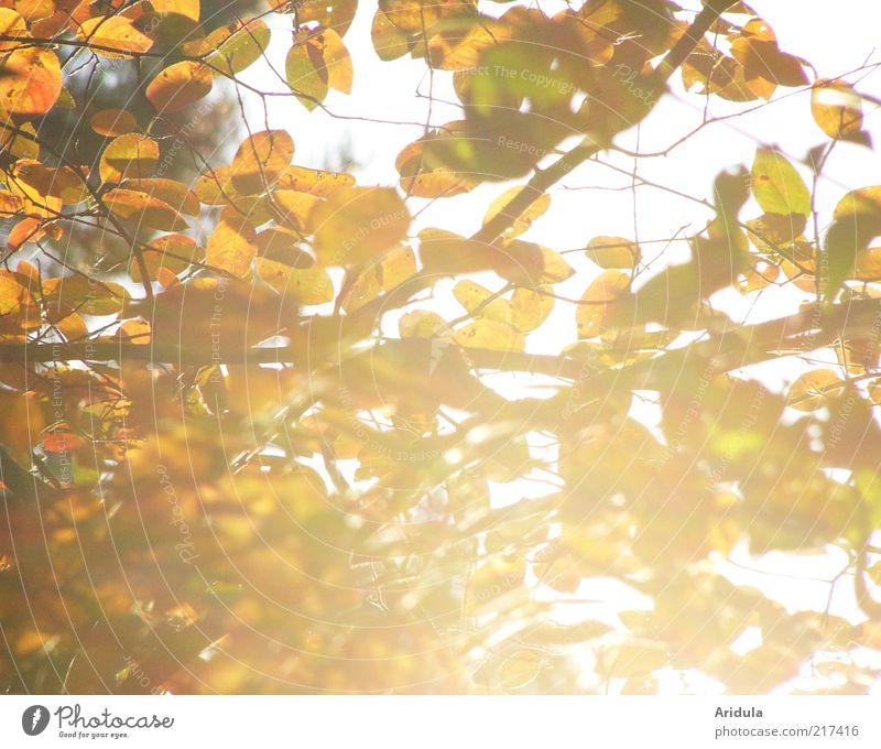 autumn sun Environment Nature Landscape Plant Autumn Bushes Leaf Glittering Illuminate To dry up Bright Beautiful Brown Yellow Gold Moody To enjoy Relaxation