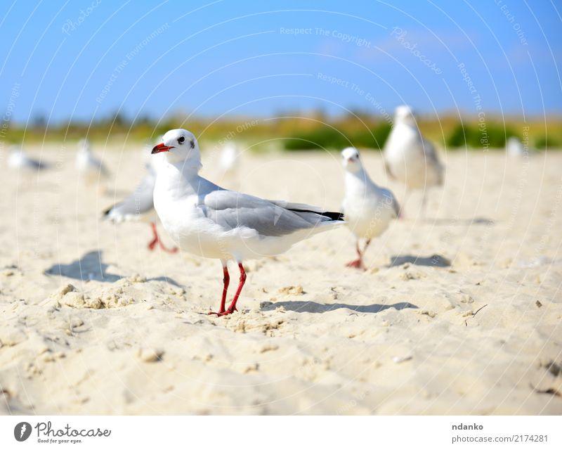 white gull walks along the sandy beach Sky Nature Blue Summer White Sun Landscape Ocean Red Animal Beach Black Natural Coast Freedom Bird