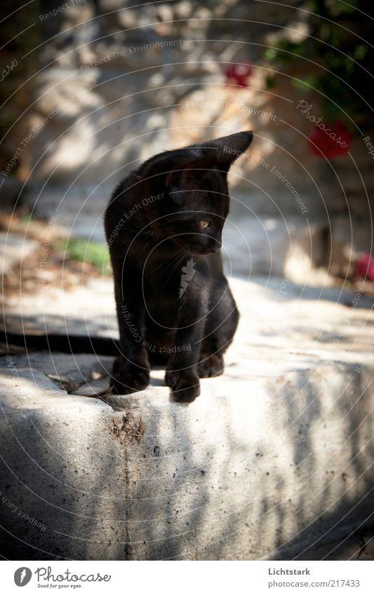 Cat Nature Animal Colour Black Baby animal Time Sit Concrete Observe Pelt Hunting Brave Brash Pet Free-living