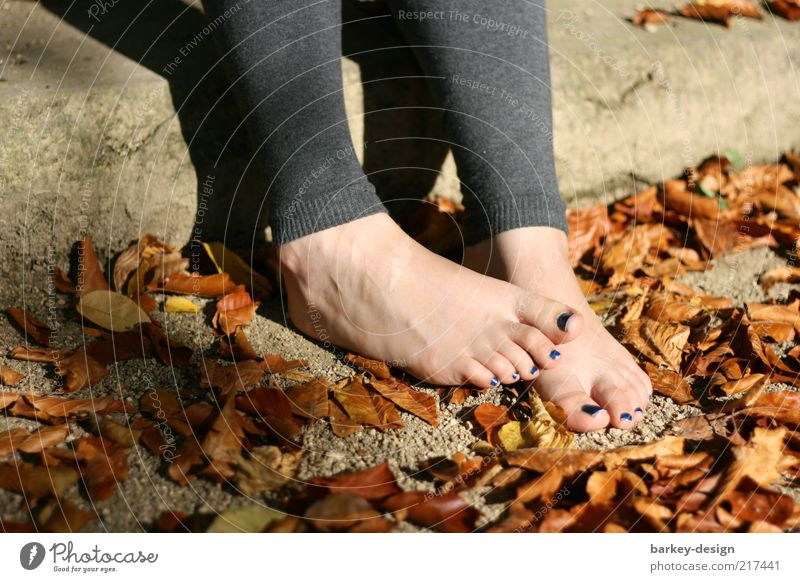 Woman Human being Nature Red Leaf Adults Yellow Autumn Feminine Emotions Feet Gold Stairs Esthetic Exceptional Cute