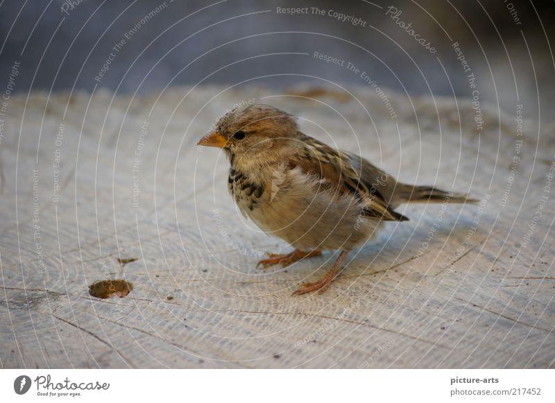 Nature Animal Gray Brown Bird Feather Wing Wild animal Tree trunk Beak Wood grain Sparrow Annual ring Passerine bird