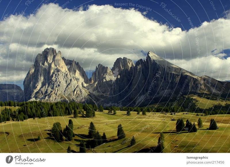 Nature Tree Sun Vacation & Travel Calm Clouds Far-off places Meadow Mountain Freedom Landscape Rock Trip Tourism Alps