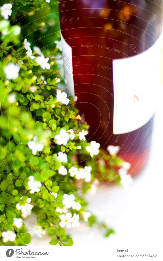Plant Summer White Flower Leaf Blossom Style Lifestyle Food Bright Decoration Elegant Blossoming Beverage Delicious Wine