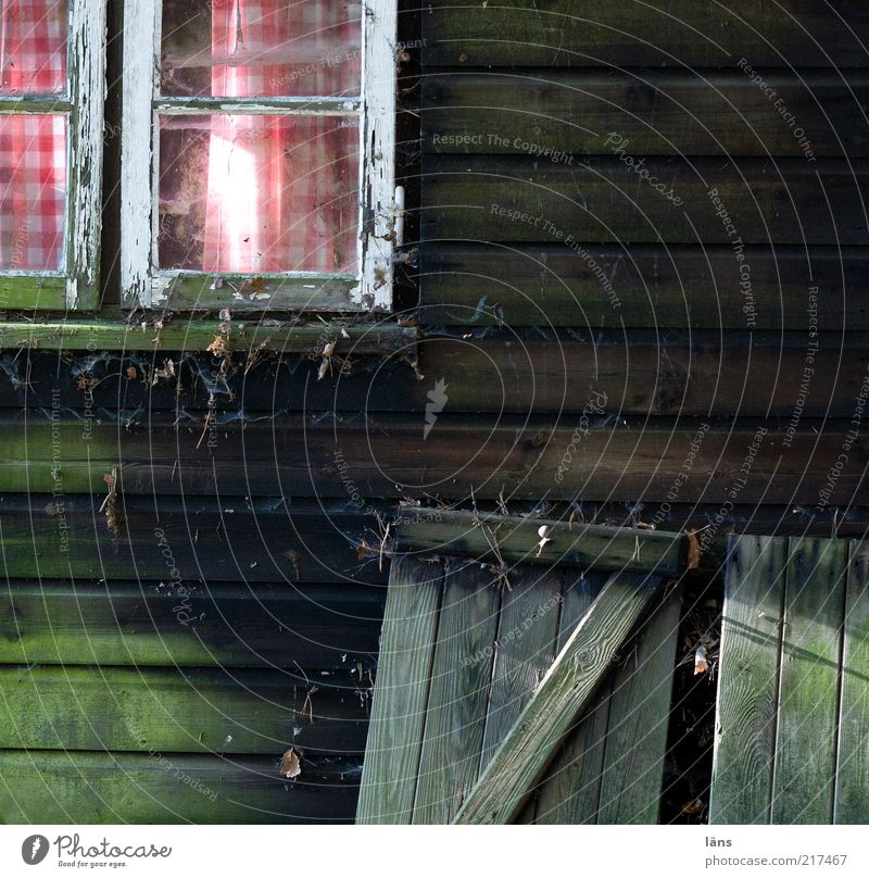 cottage romance Hut Old Wood Curtain Window Dirty Checkered Cobwebby Wooden board Shutter Window pane Copy Space right Copy Space bottom Deserted Wooden hut