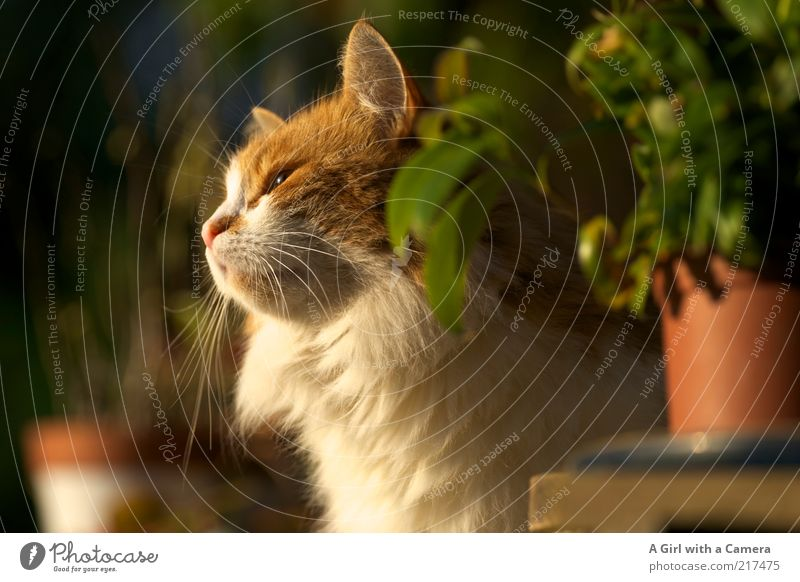 White Beautiful Plant Animal Relaxation Cat Orange Wait Pelt Friendliness Serene To enjoy Sunbathing Pet Flowerpot Domestic cat