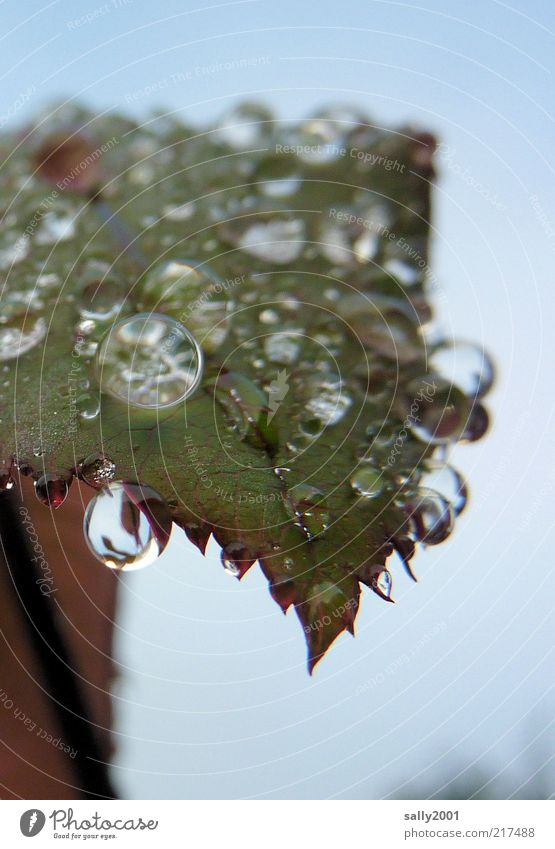 Nature Plant Calm Leaf Cold Autumn Glittering Wet Drops of water Fresh Esthetic Round Authentic Natural Fluid