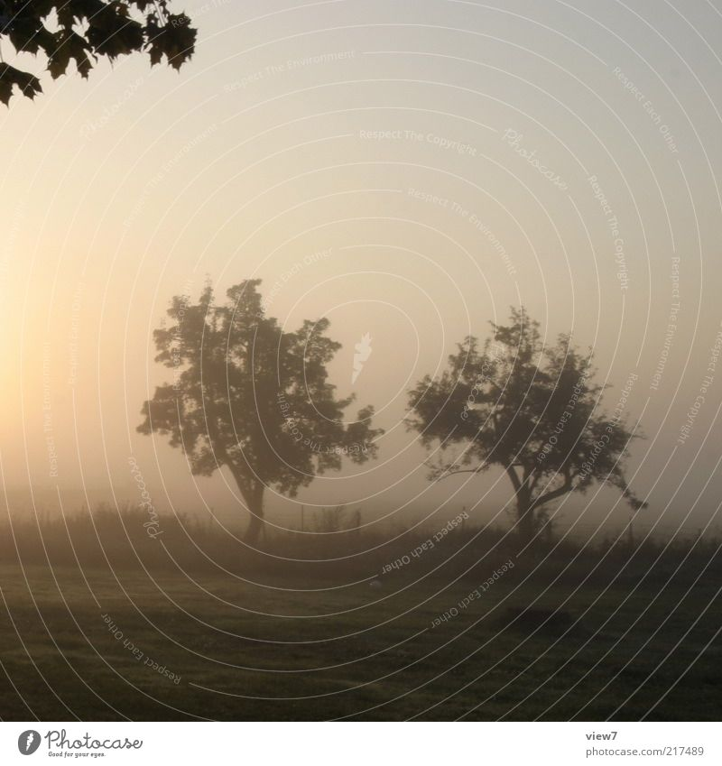 Nature Beautiful Sky Tree Plant Summer Calm Leaf Meadow Grass Landscape Fog Environment Esthetic Romance End
