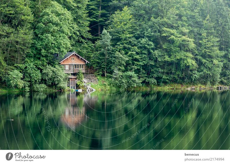 Silence at the lake Environment Nature Landscape Plant Water Summer Tree Forest Lake Freiberg Lake Hut Green Idyll Symmetry Reflection Smoothness Calm