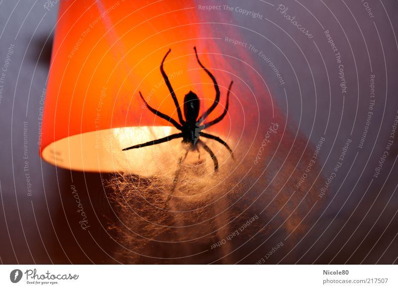 Halloween decoration Animal Spider Disgust Lampshade Hallowe'en Decoration Creepy Colour photo Interior shot Deserted Copy Space right Neutral Background