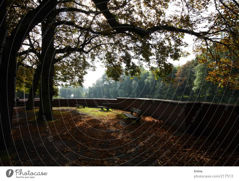 Tree Leaf Relaxation Autumn Wall (barrier) Park Gold Break Bench Branch Longing To enjoy Afternoon Autumn leaves Peaceful Autumnal