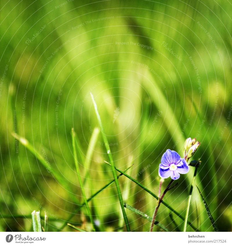 so small, so special Environment Nature Landscape Plant Spring Summer Beautiful weather Flower Grass Blossoming Green Patient Calm Hope Blade of grass Growth