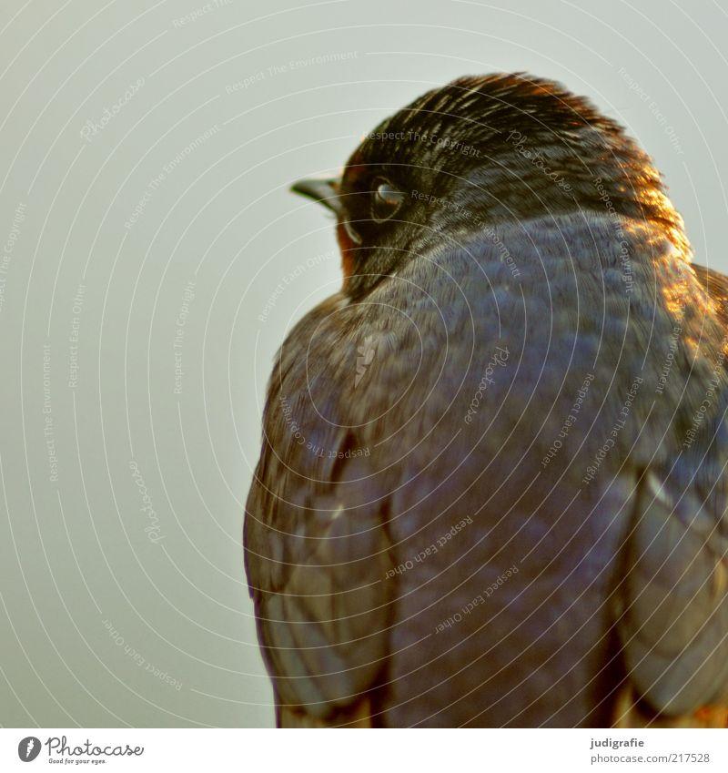 Nature Eyes Animal Bird Wait Environment Sit Feather Natural Wild animal Cute Beak Swallow