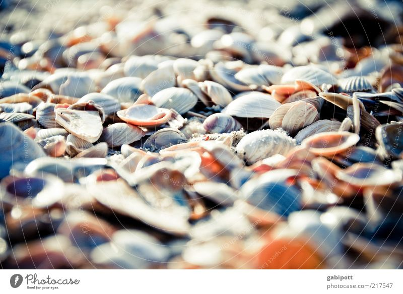 Nature Beach Environment Sand Coast North Sea Many Joie de vivre (Vitality) Beautiful weather Mussel Difference Multicoloured Animal Versatile Deserted