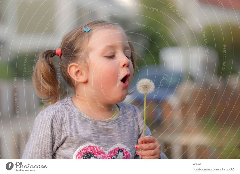 dandelion Playing Child Human being Feminine Toddler Girl 1 3 - 8 years Infancy Nature Plant Flower Happiness Fresh Dandelion taraxacum Childlike Colour photo