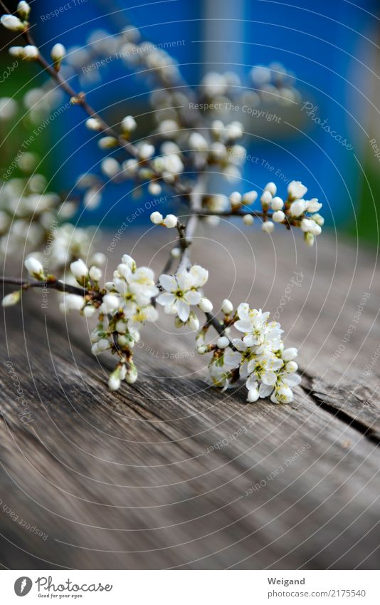 Beautiful White Relaxation Calm Blossom Spring Love Contentment Gift Branch Touch Well-being Harmonious Serene Twig Meditation