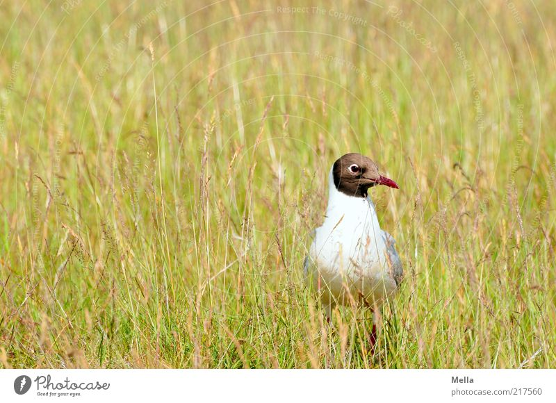 Nature Green Plant Animal Yellow Meadow Grass Freedom Landscape Bird Environment Earth Sit Stand Natural Curiosity