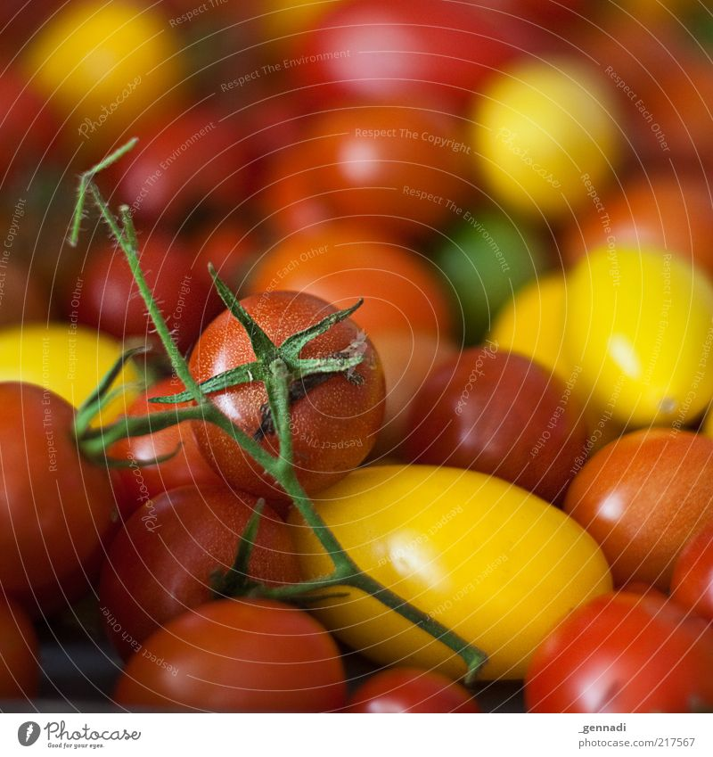 Green Red Nutrition Yellow Healthy Food Fresh Change Uniqueness Natural Stalk Vegetable Delicious Mature Many Tomato