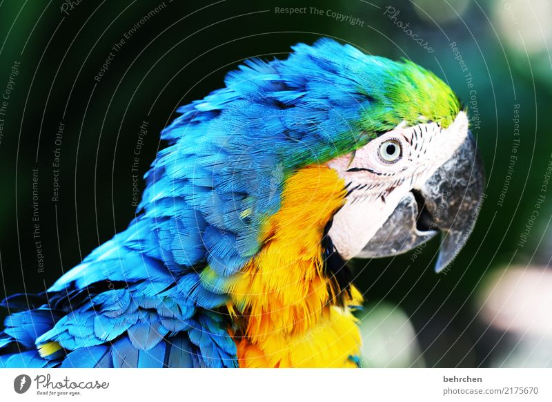 Blue Beautiful Animal Yellow Eyes Exceptional Bird Fantastic Observe Metal coil Exotic Animal face Zoo Beak Parrots Macaw