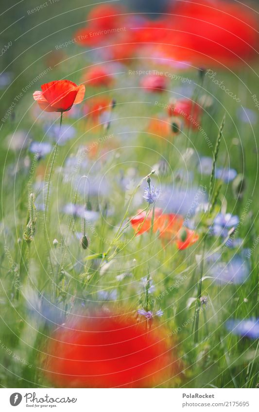#A# Poppy Field I Environment Nature Esthetic Poppy blossom Poppy field Wayside Red Flower Meadow flower Colour photo Multicoloured Exterior shot Detail