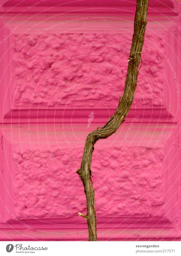 architectural girl photo. Plant Branch Manmade structures Building Architecture Wall (barrier) Wall (building) Facade Stone Wood Line Brown Pink Classicism