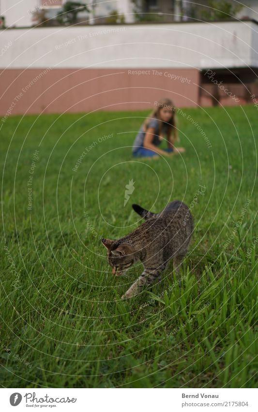Green Feminine Girl 1 Human being Grass Village Garden Animal Cat Natural Wall (barrier) Crouch Search Curiosity Tiger skin pattern Domestic cat Spy Odor