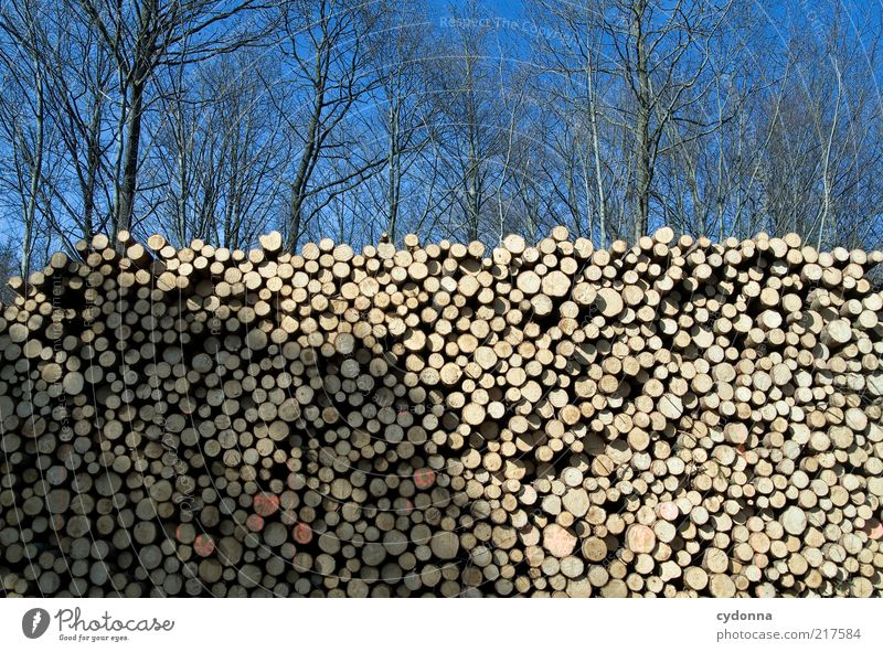 See trees in the forest Environment Nature Cloudless sky Tree Forest Esthetic End Idea Sustainability Calm Transience Change Value Tree trunk Stack Barrier