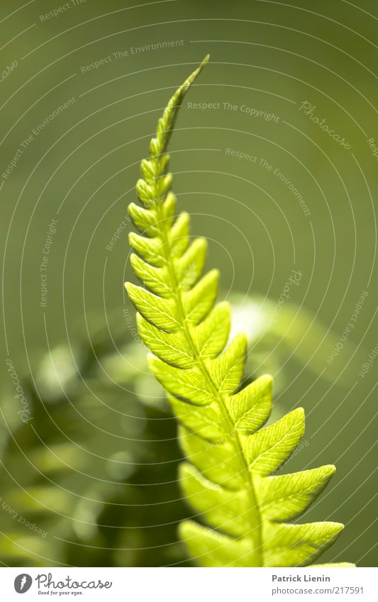 Nature Beautiful Green Plant Summer Leaf Line Moody Elegant Environment Esthetic Authentic Observe Point Delicate Illuminate