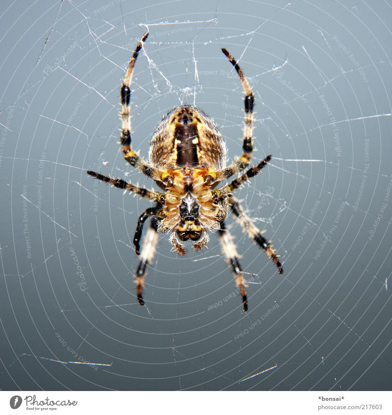 Nature Calm Animal Gray Legs Brown Fear Wait Natural Threat Net To hold on Observe Catch Hunting