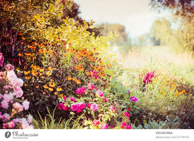 Autumn garden with flowers Lifestyle Design Summer Garden Nature Plant Tree Flower Grass Bushes Leaf Blossom Park Yellow Aster Beautiful weather Colour photo