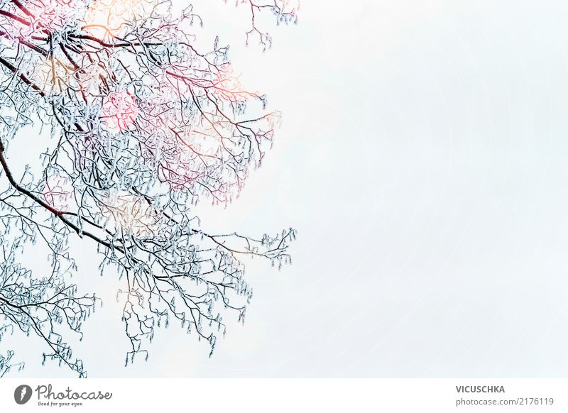 Sky Nature Christmas & Advent Tree Winter Lifestyle Background picture Snow Garden Park Bushes Beautiful weather Frost Treetop Twigs and branches Winter mood