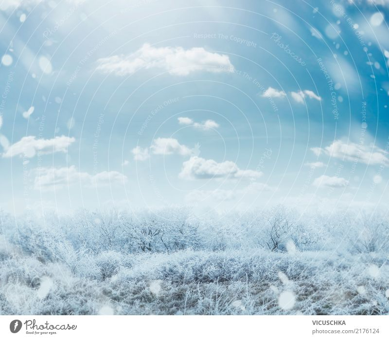 Sky Nature Christmas & Advent Tree Landscape Winter Lifestyle Background picture Snow Grass Garden Snowfall Park Bushes Beautiful weather Frost
