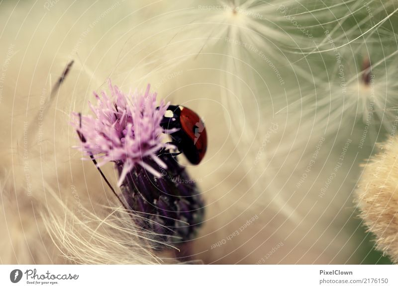 Nature Vacation & Travel Summer Beautiful Red Animal Meadow Garden Tourism Flying Moody Trip Field Blossoming Climate Beetle