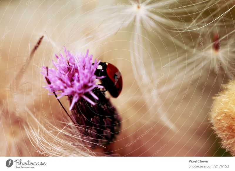 ladybugs Trip Summer Hiking Nature Landscape Plant Blossom Garden Meadow Field Animal Wing 1 Blossoming Flying To feed Esthetic Violet Red White Emotions Happy