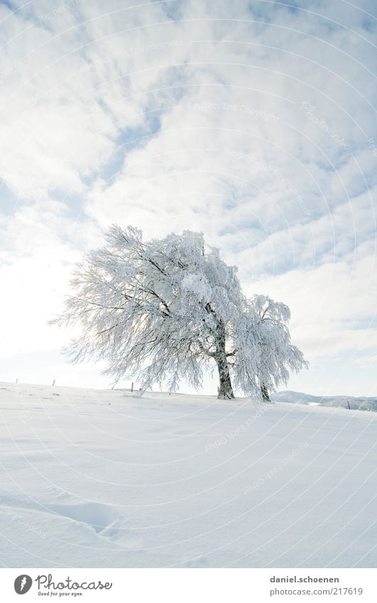 Sky White Tree Blue Winter Far-off places Snow Ice Bright Frost Climate Beautiful weather Nature Black Forest Twigs and branches Beech tree