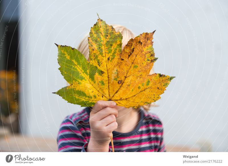 Child Human being Leaf Joy Girl Life Healthy Autumn Movement Dream Infancy Fresh Happiness Study Friendliness Touch