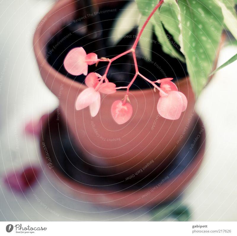 Nature Beautiful Flower Green Plant Leaf Contentment Heart Pink Design Romance Uniqueness Joie de vivre (Vitality) Fragrance Positive Exotic