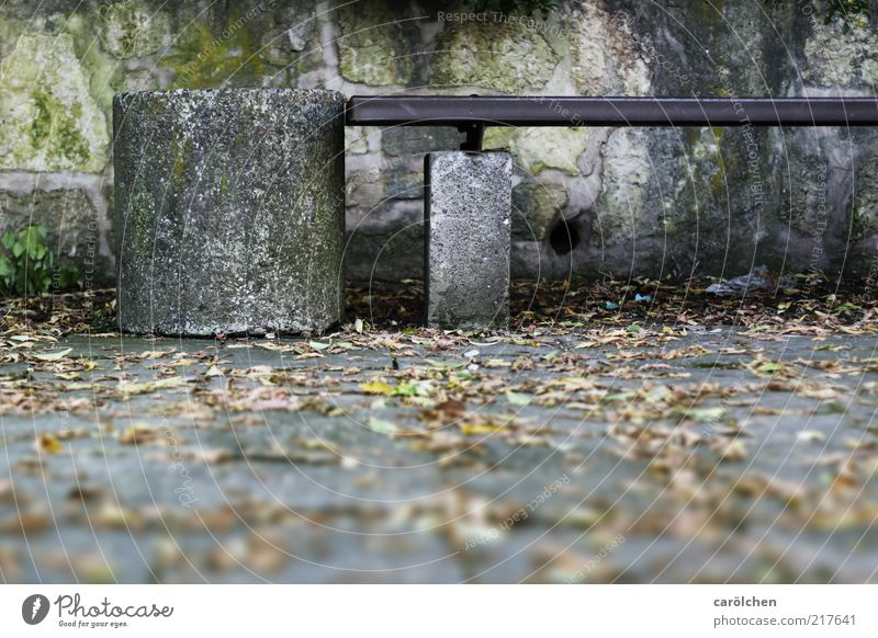 Green Wall (building) Gray Stone Wall (barrier) Wet Concrete Gloomy Break Bench Shabby Moss Seating Memory Trash container Autumn leaves