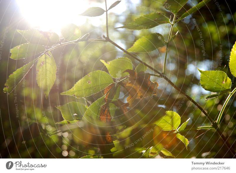 Nature Tree Sun Green Plant Leaf Autumn Warmth Environment Bushes Change Transience Branch Illuminate Seasons Beautiful weather