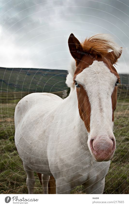 Sky Nature Beautiful White Animal Environment Far-off places Meadow Funny Horizon Natural Weather Authentic Nose Cute Horse