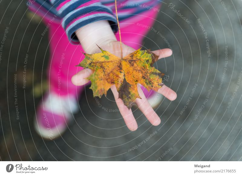 Child Human being Vacation & Travel Hand Leaf Yellow Autumn Happy Pink Infancy Smiling Touch Discover Serene Toddler Kindergarten