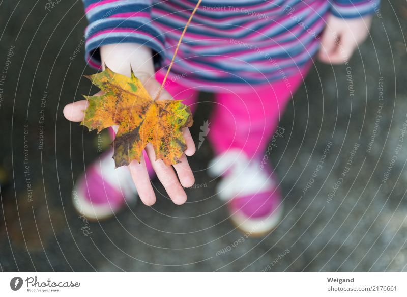 foliage Parenting Kindergarten Child School Study Family & Relations Infancy 3 - 8 years 8 - 13 years Glittering Friendliness Yellow Pink Autumn Leaf Handicraft